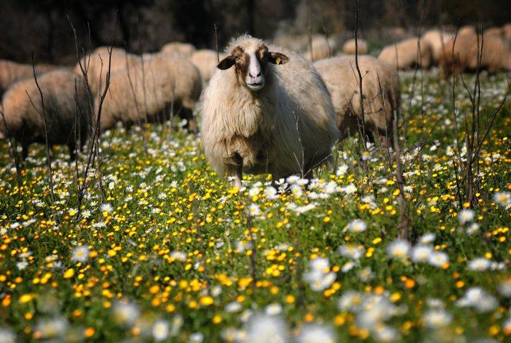 Fethiye'de erken bahar
