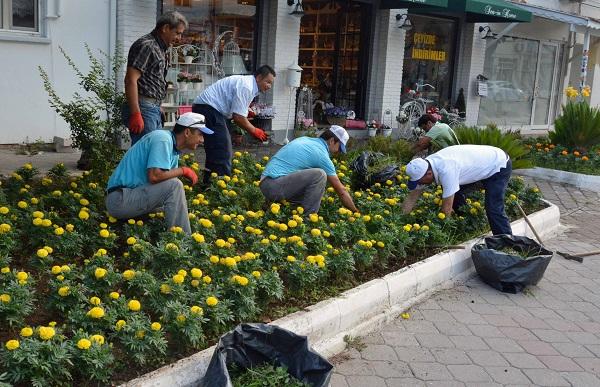 Başkan Saatcı, çiçek böcekle uğraşıyor