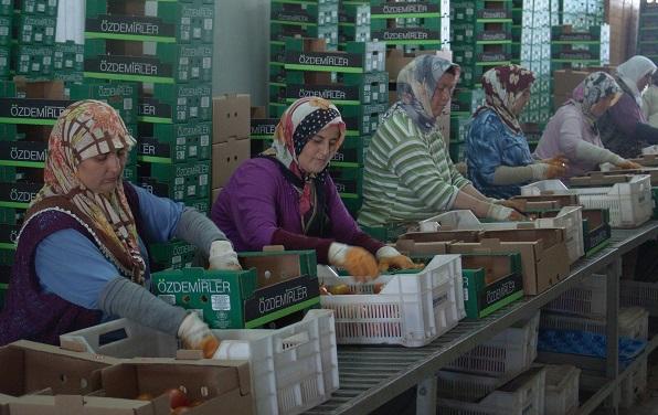 Uzayan bürokrasi ihracatçıların ürünlerini deforme ediyor