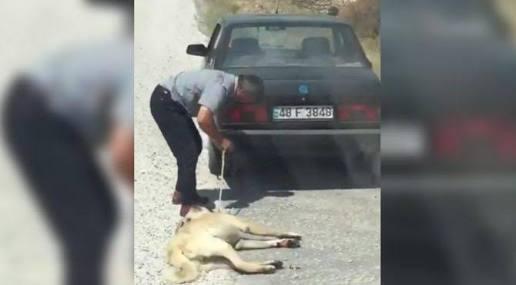 Aracının arkasına bağladığı köpeği sürükleyen sürücü gözaltına alındı