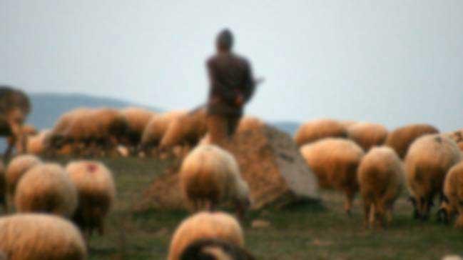 Bir çoban daha öldürüldü