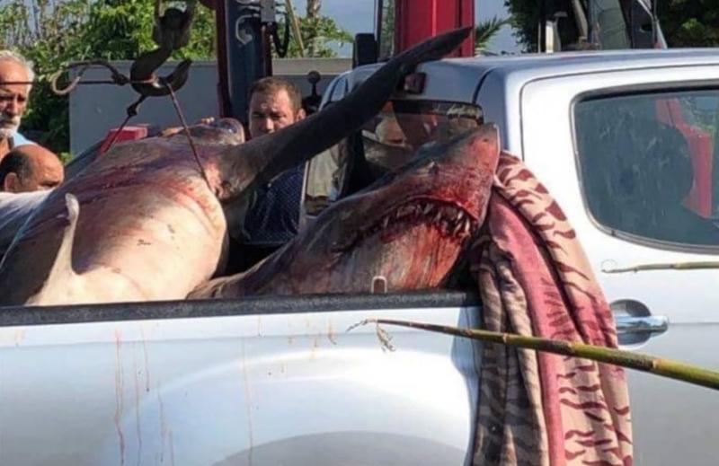 Fethiye Körfezi Açıklarında Köpek Balığı Yakalandı