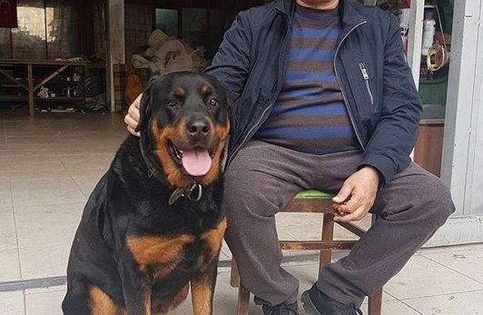 Köpek dövmekten gözaltına alınan şahıs serbest bırakıldı