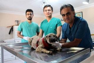 Zifte gömülen yavru köpek, İngiltere yolcusu