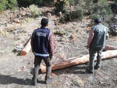 Orman İşletmedeki dolandırıcılık soruşturmasında 2. Dalga: 13 Gözaltı