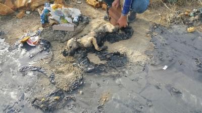 Köpeğin üzerine asfalt döktüler